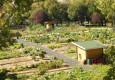A minha horta em telheiras