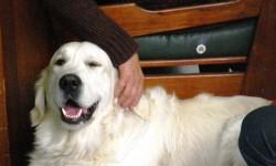 O meu colega terapeuta – o cão