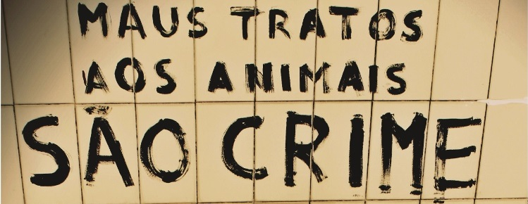 PSP lança campanha contra maus tratos aos animais capa