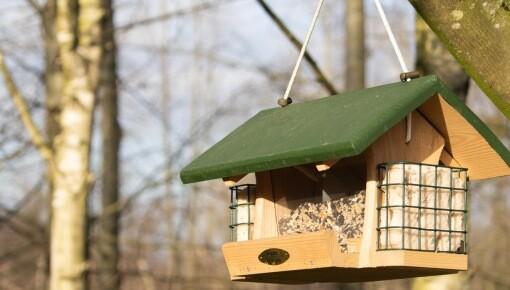 Casa pássaros